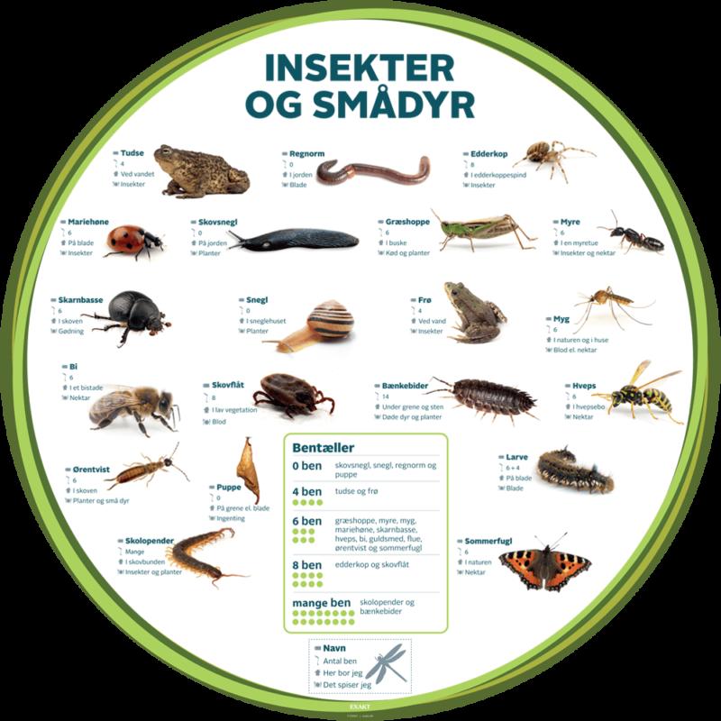 Insekter og Smådyr med bentæller, Ø100 cm - Læringstavle-0