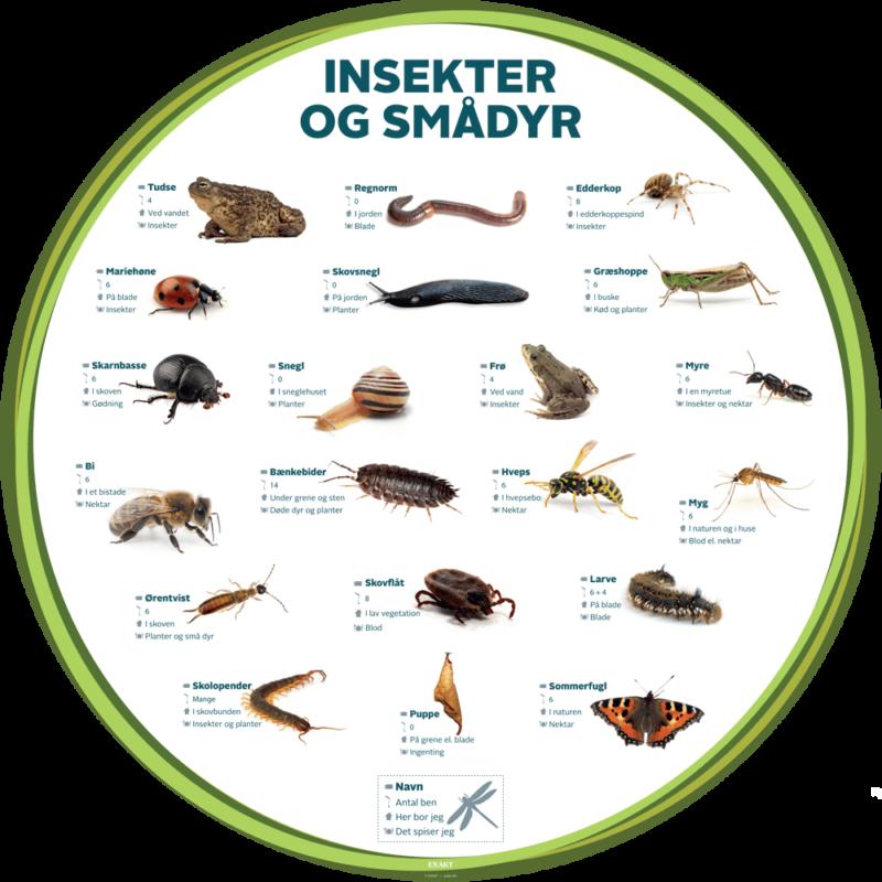 Insekter og smådyr - Læringstavle-29037