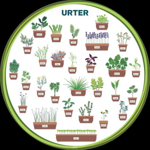 Urter - Læringstavle-29031