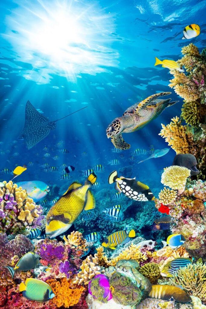 undervandet01 m