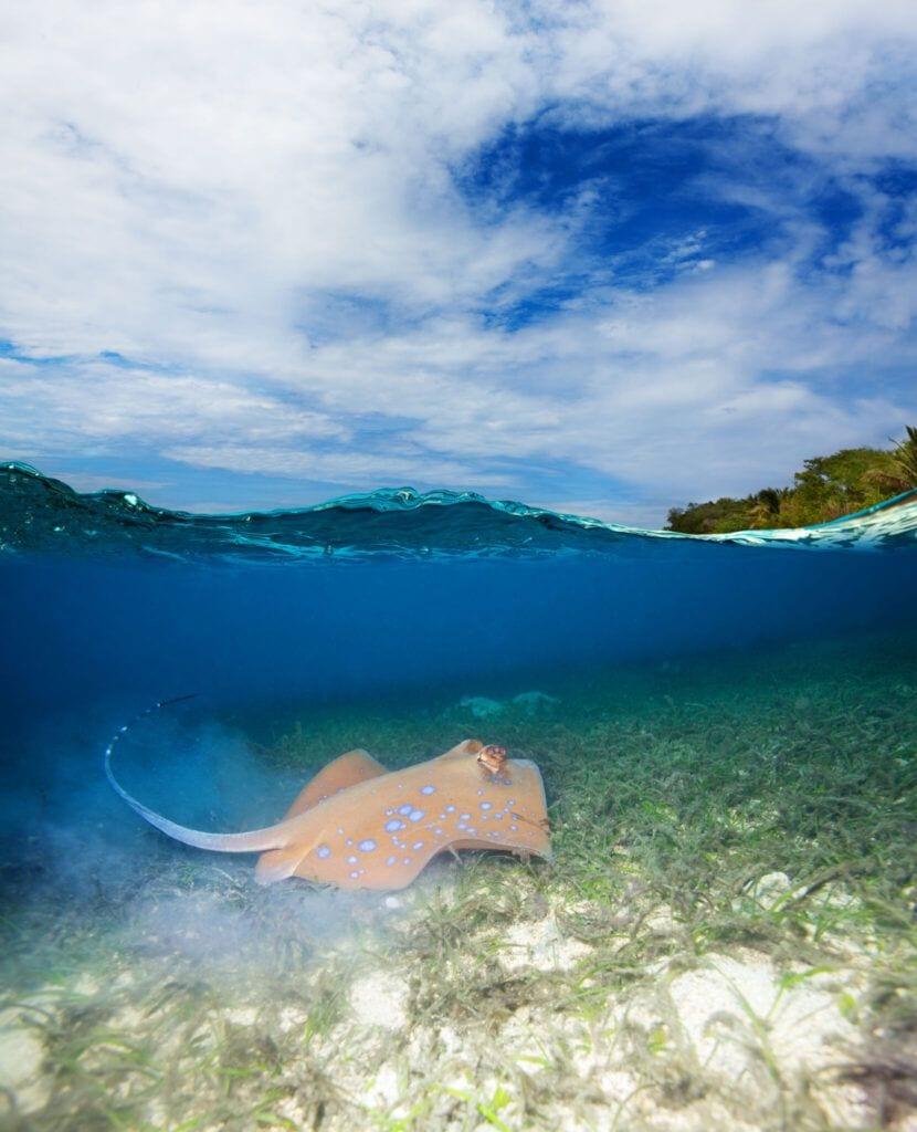 undervandet02 m