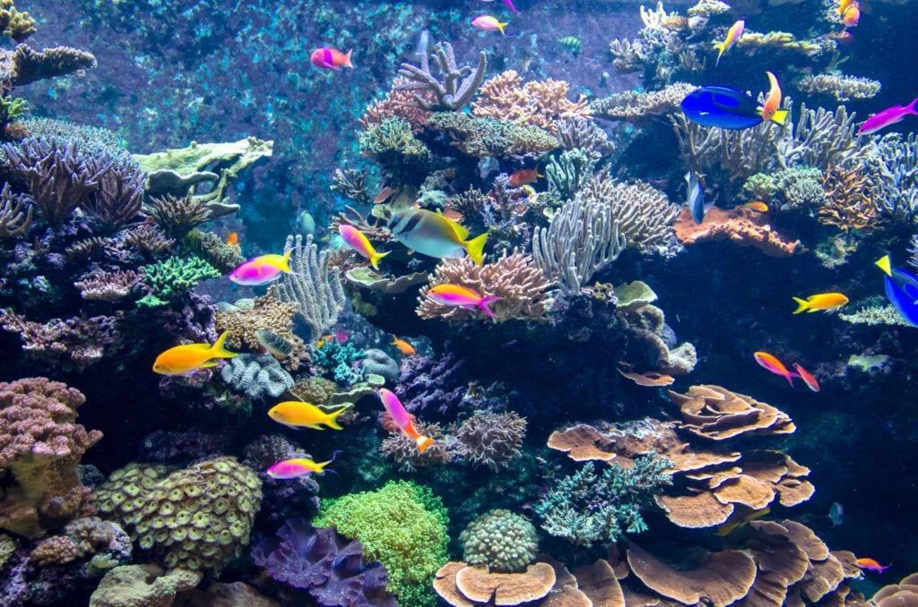 undervandet03 m