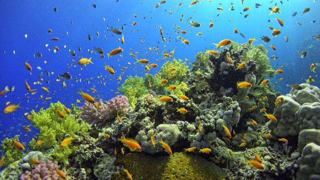 undervandet04 m