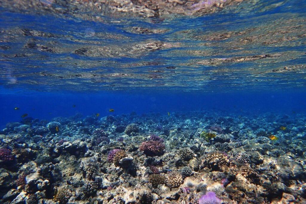 undervandet06 m