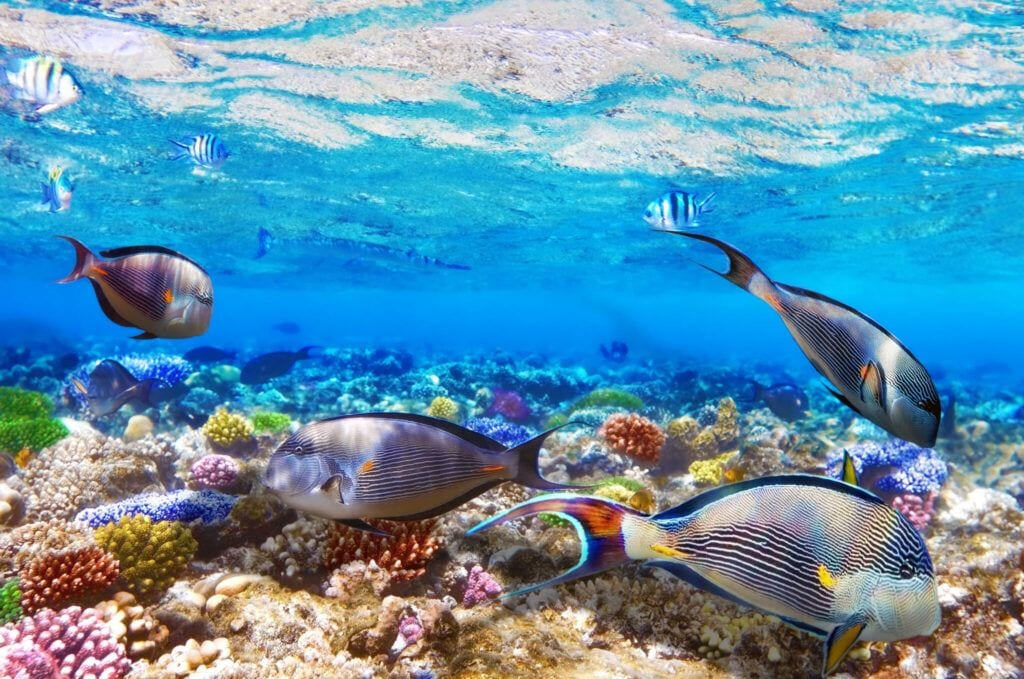 undervandet07 m