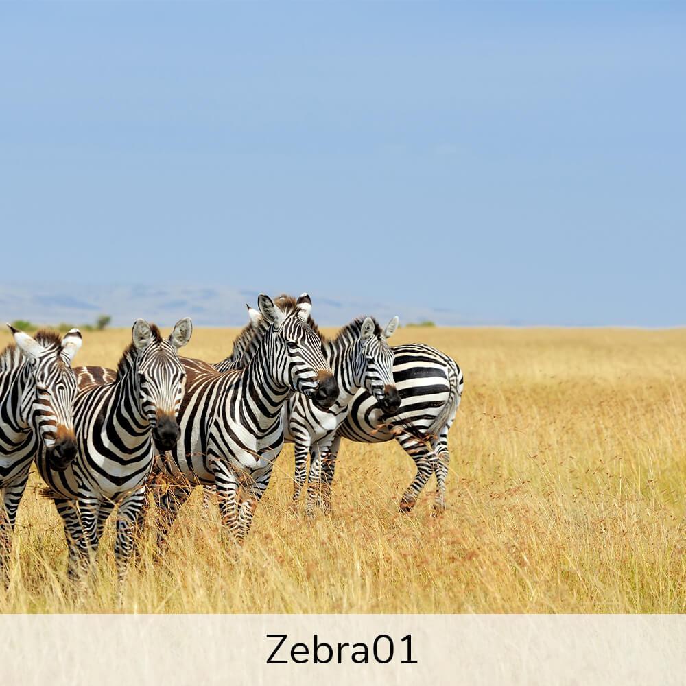 Vægramme - Motiver af eksotiske dyr-27426